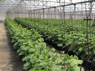 Grow Bags Manufacturer Sri Lanka
